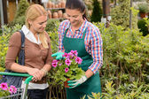 Worker show customer potted flower — Stock Photo