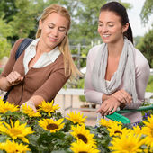 Woman shopping for sunflowers — Stock Photo