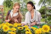 Woman choosing sunflowers — Stock Photo