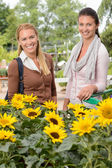 Woman customer standing by sunflowers — Stock Photo