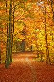 Pathway through the autumn park — Stock Photo