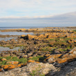 Coastal Rocks, Bornholm — Stock Photo #18986253