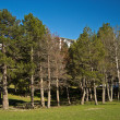 Forest edge in Andorra — Stock Photo