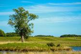 Güzel göl dyrehave park, danimarka — Stok fotoğraf