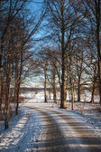 Path through the forest in winter — Stock Photo