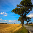 Tree in meadow — Stock Photo #41278985