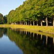 Alley of trees reflection in water — Stock Photo #41580523