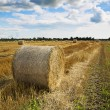 Rye is bended to ball for storage — Stockfoto