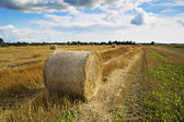 Rye is bended to ball for storage — Stock Photo