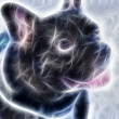 Zoomed french bulldog dog calm look face — Stock Photo #21904999
