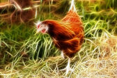 Brown hen with white legs is searching — Stock Photo