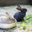 Different rabbit at zoo cell for watch — Stockfoto