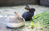 Different rabbit at zoo cell for watch — Stock Photo