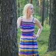 Foto Stock: Womin dress behind pine tree stem