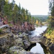 Coast of river covered by autumn forest — Stock Photo