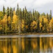 Lake surface and autumn forest on background — Stock Photo