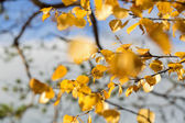 Leafs are still hanging on tree branches — Stockfoto