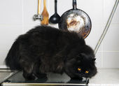 Male cat stand on stove smooth surface — Stock Photo
