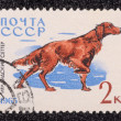Postage stamp — Stockfoto