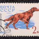 selo postal — Foto Stock