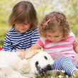 Two Children Petting Family Dog In Summer Field — Stockfoto