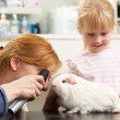 Female Veterinary Surgeon Examining Child's Guinea Pig In Surger — Stock Photo