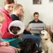 Busy Waiting Room In Veterinary Surgery - Stock Photo