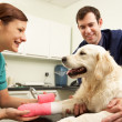 Male Veterinary Surgeon Treating Dog In Surgery — Stock Photo