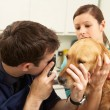 Male Veterinary Surgeon Examining Dog In Surgery — Stock Photo