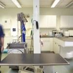 Male Veterinary Surgeon And Nurse Preparing Surgery — Stock Photo #24441933