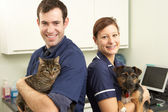Male Veterinary Surgeon And Nurse Holding Cat And Dog In Surgery — Stock Photo
