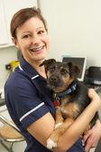 ženské veterinárního lékaře držení psa v chirurgii — Stock fotografie