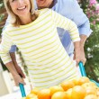 Senior Couple Pushing Wheelbarrow Filled With Oranges — Stock Photo
