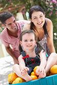 Genitori spingere la figlia in una carriola pieno di arance — Foto Stock