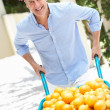 Senior Man Pushing Wheelbarrow Filled With Oranges - Stockfoto