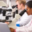 Male And Female Scientists Using Microscopes In Laboratory — Stock Photo #24648289