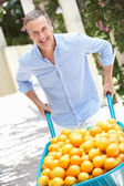 Senior Man Pushing Wheelbarrow Filled With Oranges — Stock Photo