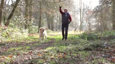 Man with his dog in the woods playing fetch — Stock Video