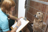 Veterinary Nurse Checking On Dog In Cage — Stock Photo
