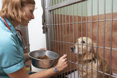 Feeding Dog In Cage — Stock Photo