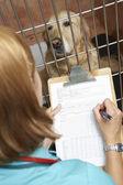 Infermiera veterinaria controllando il cane in gabbia — Foto Stock
