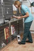 Veterinární sestra na zvířata v klecích — Stock fotografie