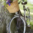 Old Fashioned Bicycle — Stock Photo #48296521