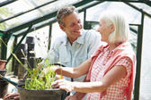 Couple Working Together In Greenhouse — Stock Photo