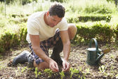 Man Planting Seedling In Ground — Photo