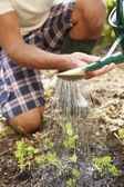 Man Planting Seedling In Ground — Stock Photo