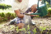 Man Watering Seedlings In Ground — Photo