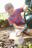 Boy Watering Seedlings In Ground — Stock Photo