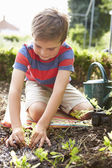 Boy Planting Seedlings In Ground — Stok fotoğraf