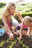 Mother And Daughter Planting Seedlings — Stock Photo